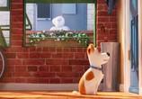 Кадр изо фильма Тайная житьё домашних животных торрент 031699 работник 0