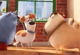 Кадр с фильма Тайная век домашних животных торрент 031699 сцена 0