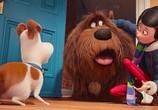 Кадр изо фильма Тайная бытье домашних животных торрент 031876 ухажер 0