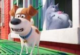 Кадр изо фильма Тайная век домашних животных торрент 042408 люди 0