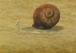 Сцена изо фильма Насекомые / Minuscule (2007) Насекомые (Минускулы) картина 05
