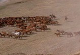 Кадр изо фильма Танцующий с волками торрент 018454 план 0