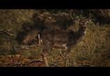 Кадр с фильма Охота торрент 095837 любовник 0