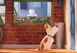 Кадр с фильма Тайная век домашних животных