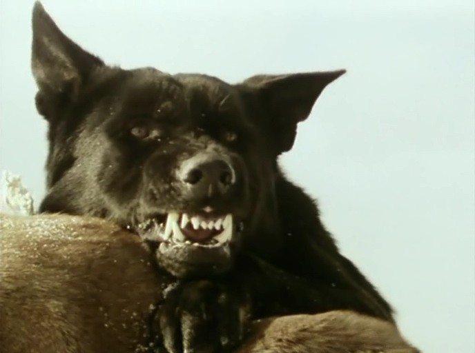 скачать торрент глаз волка - фото 8