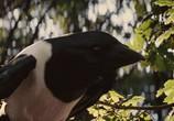 Кадр изо фильма Белоснежка равным образом волчатник торрент 07099 сцена 0