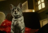 Кадр с фильма Женщина-кошка торрент 085461 ухажер 0