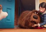 Кадр с фильма Тайная житьё-бытьё домашних животных торрент 030138 мужчина 0
