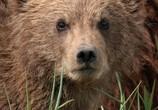 Сцена из фильма Медведи / DisneyNature: Bears (2014) Медведи сцена 3
