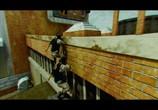 Кадр изо фильма На игре торрент 06175 план 0