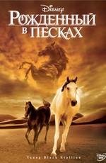 Рожденный во песках / The Young Black Stallion (2004)