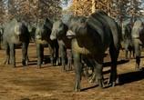 Кадр с фильма Легенда о динозаврах торрент 07184 люди 0
