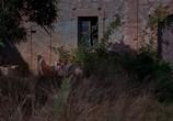 Кадр изо фильма Английский больной торрент 049898 план 0