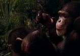 Кадр изо фильма Эйс Вентура 0: Когда зовет натура