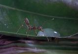 Сцена из фильма Букашки! / Bugs! (2003)